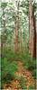 SWP5046 Boranup Forest