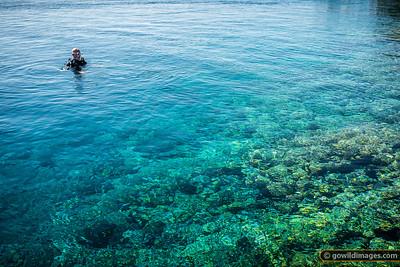 Tetamanu Diver