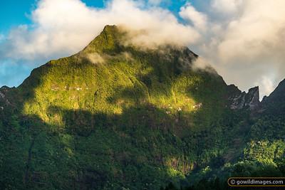 Wild Tahiti