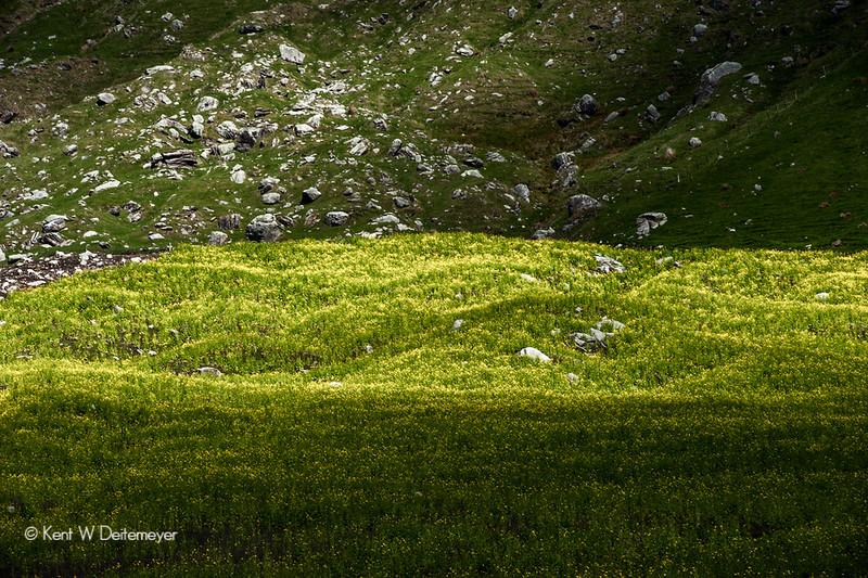 Spring paddock, Mt Aspiring Station, Otago, South Island