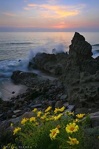 Ceropsis Sunset - Malibu, CA  Santa Monica Mountains