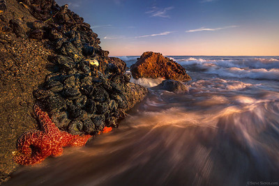 Starfish in tideline at sunset along the Southern California Coast.