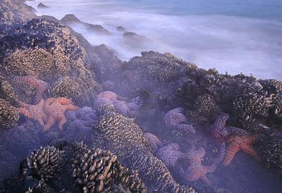 Sea Gorillas in the Mist  Santa Monica Mountains shoreline