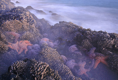 Sea Gorillas in the Mist  Santa Monica Mountains shoreline