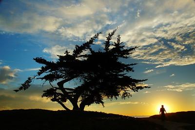 Cypress Man - Carpenteria State Beach Southern California near Los Angeles