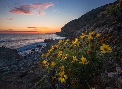 Pacific Coast Hwy Sunset Wildflowers Southern California