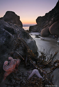 Hiding Out - Malibu, CA  Santa Monica Mountains  Most of the time I find something like this the starfish are usually underwater or in fast moving surf because most of the shoreline in my area is pretty steep.  Hope you all like it.