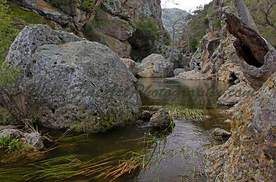 Malibu Creek rock pool reeds