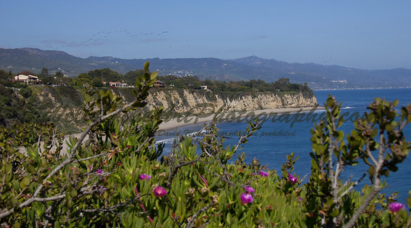 Pt Dume with iceplant