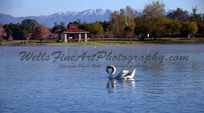 Balboa Park swan & snow