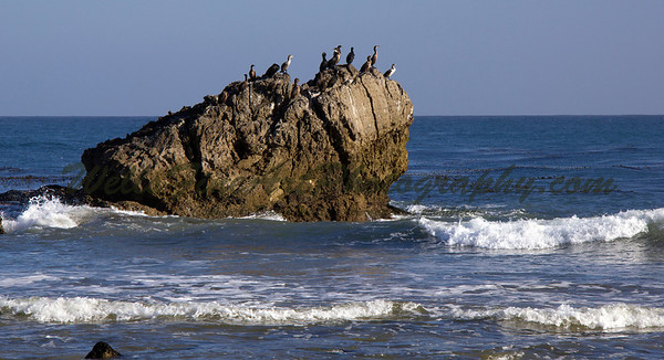 Cormorants at Leo Carillo