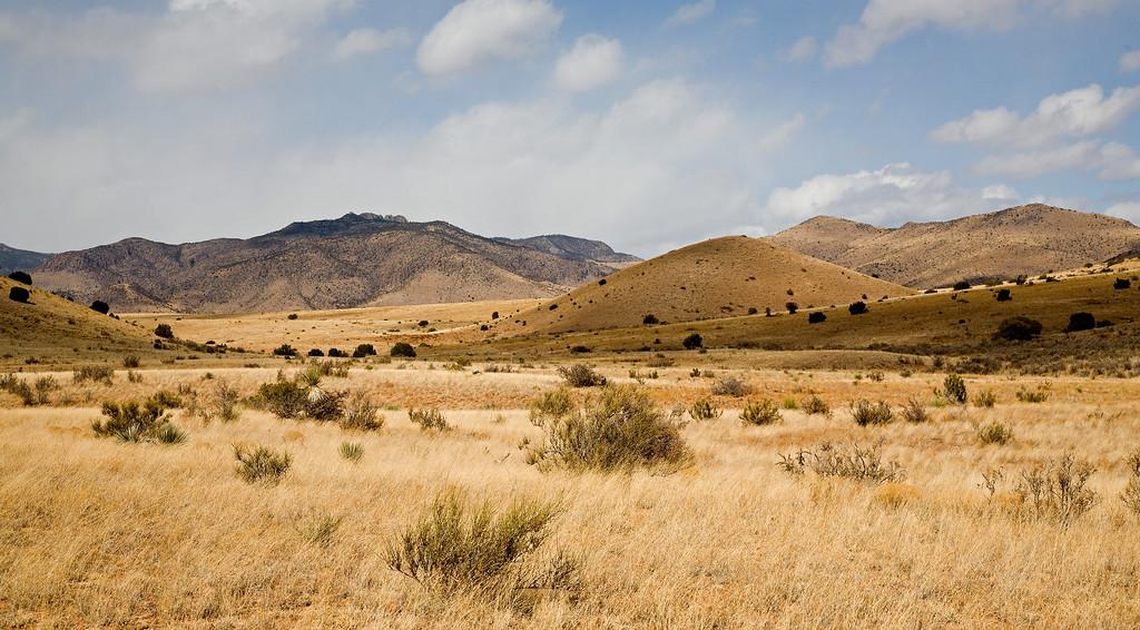 Late winter grasslands near the San Mateo mountains