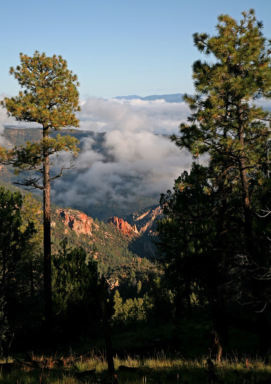 After the rain - Gila Wilderness