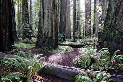 Redwoods  CA