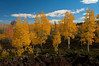 Aspens and Lava Flow, Duck Creek, Dixie National Forest, Utah