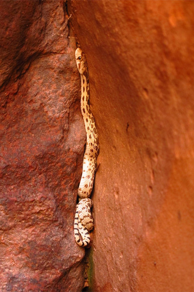 Snake, Spooky Slot Canyon, Grand Staircase Escalante National Monument, Utah