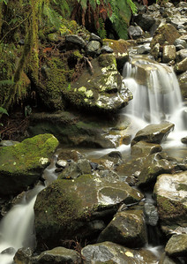 Between Te Anau and Milford Sound - crossing a stream on the way to the Chasm
