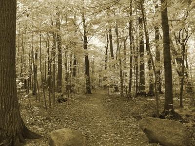 Fall, Sepia