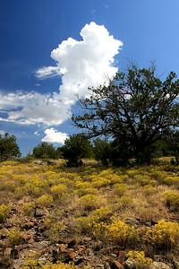 Wild Flowers, Seven Springs, AZ (21)