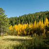 Aspens at Pikes Peak
