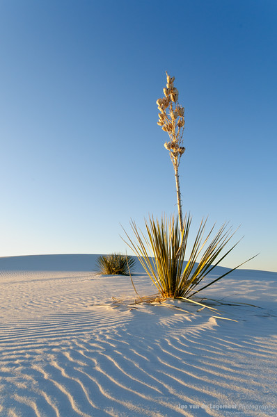 waves and yucca