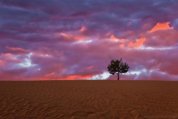 One Tree Dune - Arizona
