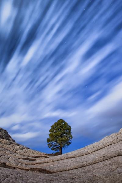 Celestial Tree - Arizona