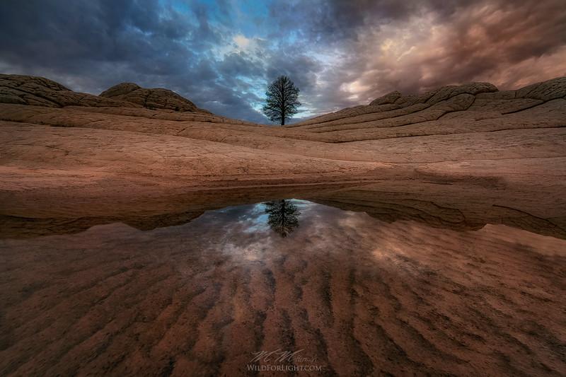 """""""Tree of Life"""" - Arizona"""