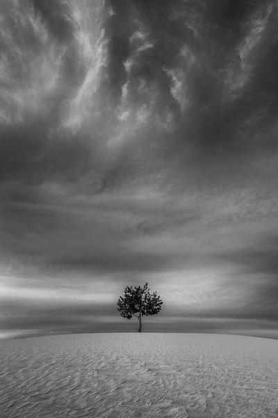 """Deserted Tree"" - Arizona"