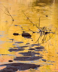 Cottonwood Reflection