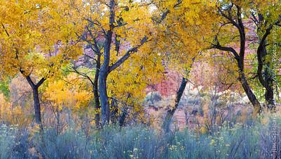 Riverbottom Foliage