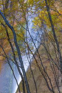 Calf Creek Falls Behind Trees