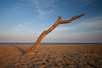 Tree on the beach @ Southwold