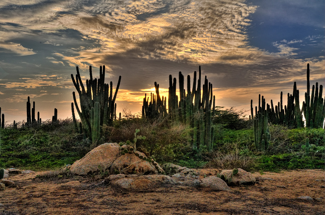 Aruba_Cactus at Sunset