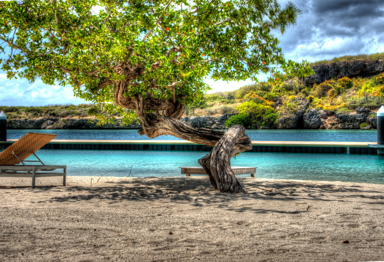 Curacao_Divi Tree