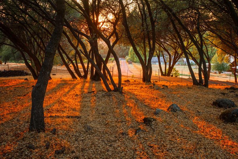 Sunset Glow Spirit Oaks Ranch