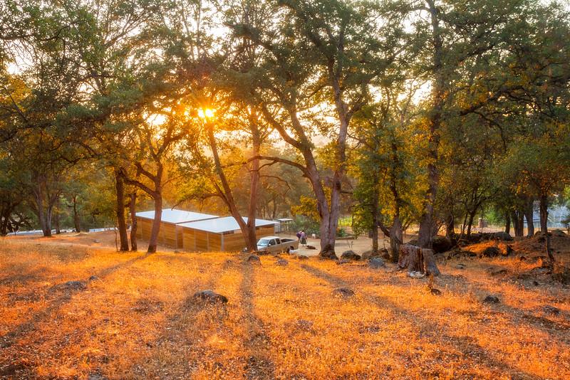 Evening Light Spirit Oaks Ranch