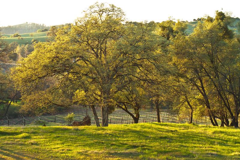 Spring Evening Spirit Oaks Ranch