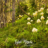 160  G Bear Grass in Forest