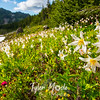 252  G Avalanche Lilies and View