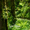 13  G Grist Mill Trail