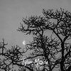 22  G Tree and Moon BW