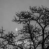 22  G Tree and Moon BW
