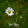 15  G White Flower