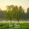7  G Sunrise Trees