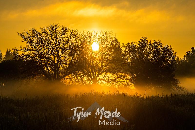 1  G Sunrise Trees Mist