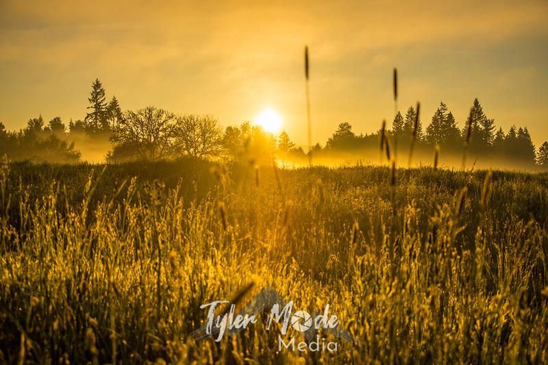13  G Sunrise Trees Mist