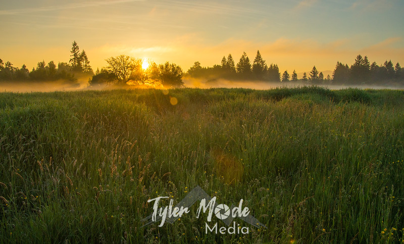 4  G Sunrise Trees Mist Field Wide