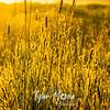 15  G Sunrise Grass Dew