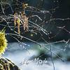 30  G Moulton Falls Spider Web